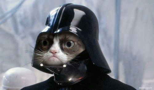 grumpy cat Darth Vader... ッ