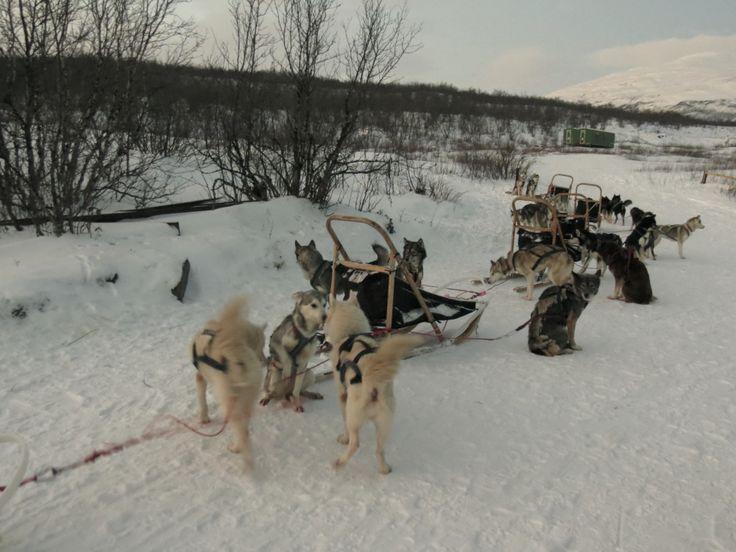 Dogsledding ad Abisko (Gabriele Formentini)