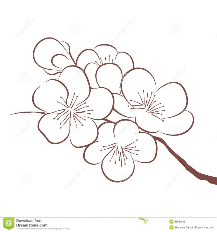 spring cherry blossom vector by catchat on vectorstock