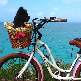Jenni and I love to ride my pretty pink Pedego in Bermuda whenever time allows.