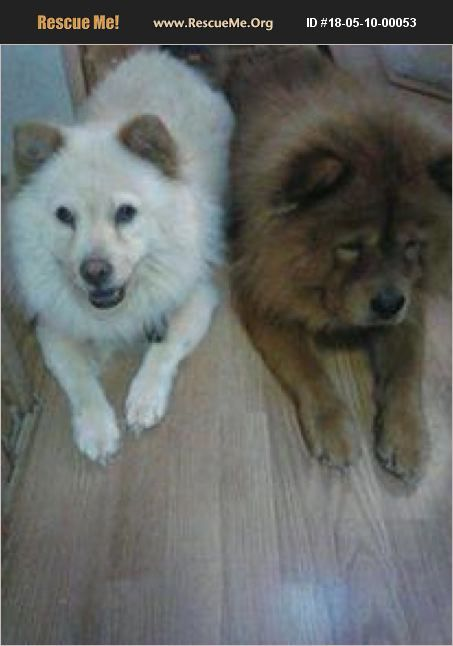 Chow Chow For Adoption In Harriman Tennessee Rescue Me