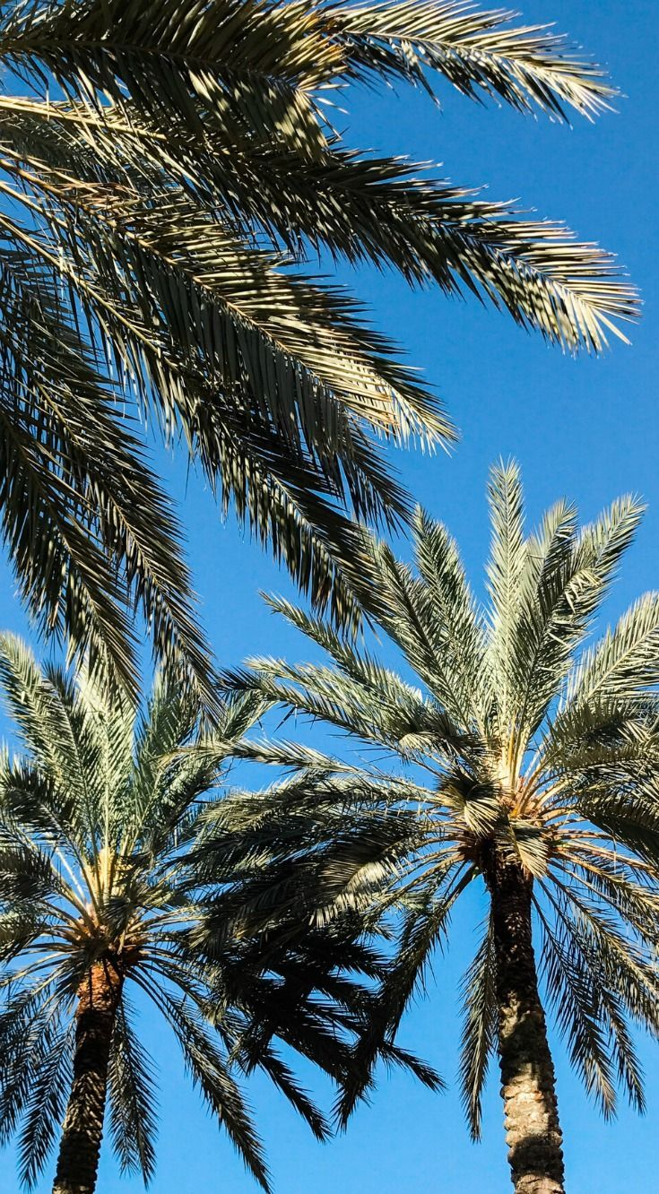 Nothing beats Florida palm trees! Planning a trip to Orlando? I've rounded up the top 10 things to do in Orlando, Florida, that are guaranteed to make your trip a success. Whether you're moving to Orlando or just headed in on vacation, you will LOVE this list of fun activities in Orlando by Florida travel blogger Ashley Brooke Nicholas #CORTatHome sponsored by @cortfurniture   affordable travel tips, orlando vacation tips, vacation tips, orlando eye, leu gardens, universal studios, disney