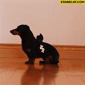Police dog chasing thief dog