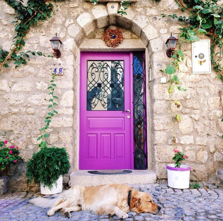 Purple door with the sweet puppy in front, what a beautiful building too.