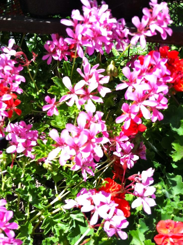 11 Best Trough Planters Images On Pinterest Herb Garden