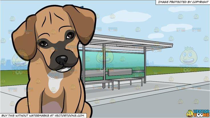 A Shy Puggle Dog And A Bus Stop At The Side Of A Street Background