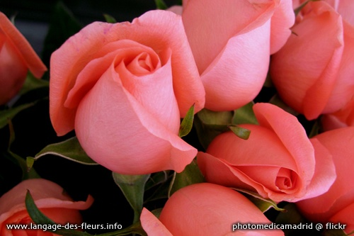 Pin by katell chen on 08 inspir meaning of flowers dans le sec - Langage des fleurs rose blanche ...