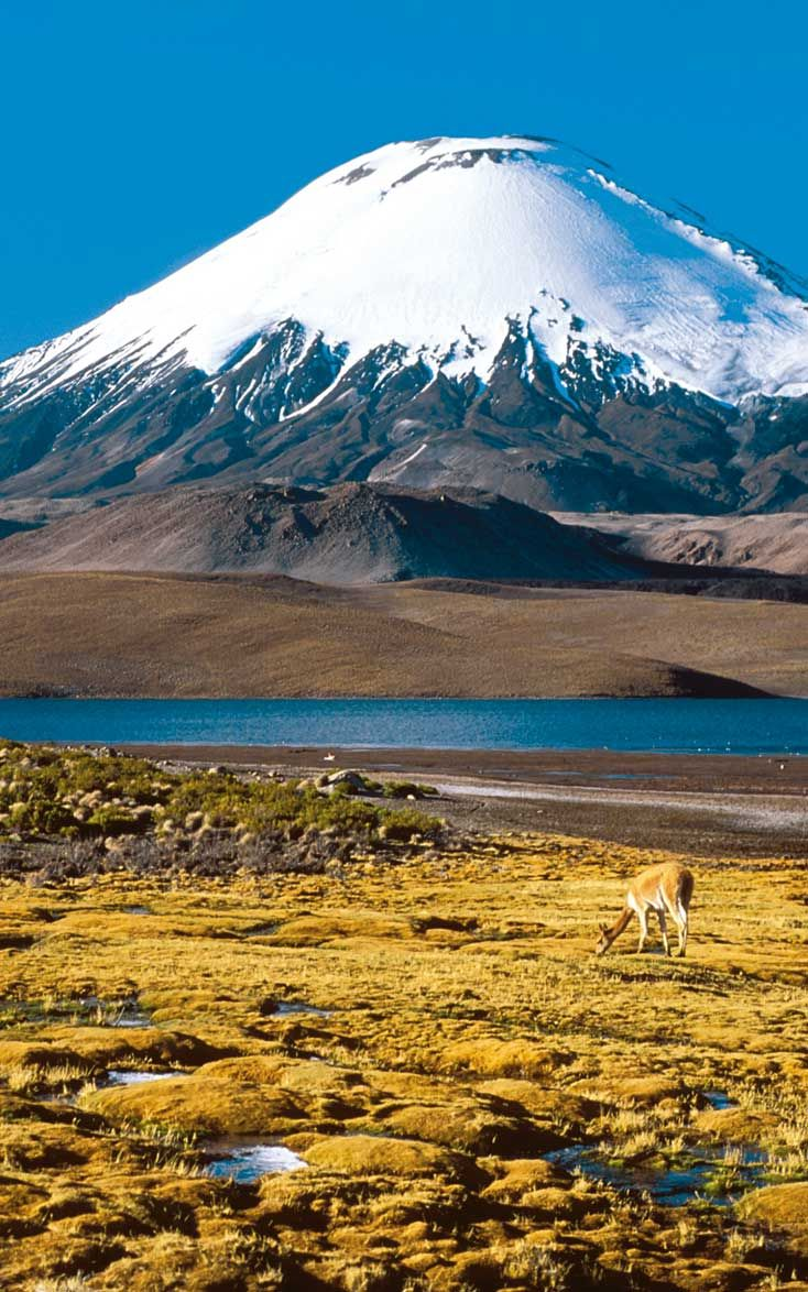 Parinacota volcano, Atacama - Chile. Click on the picture for more information about our trips #tourism #adventure #hike #landscapes