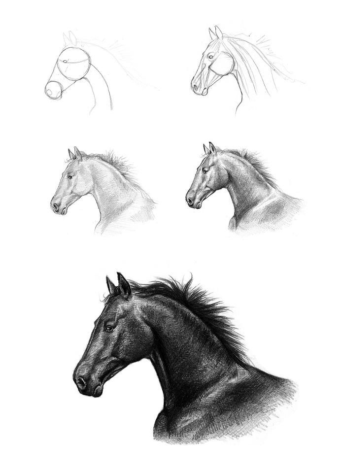 Horses drawings in pencil step by step - photo#29