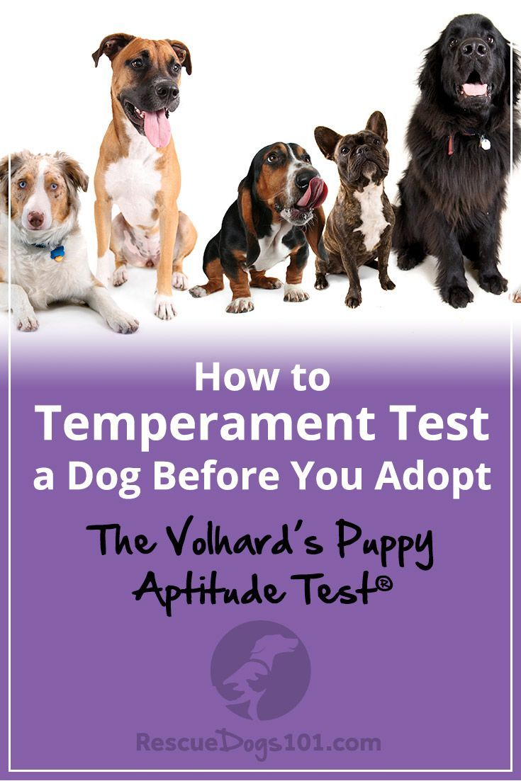 How to Temperament Test a Dog foto