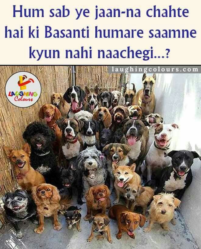 Funny, dogs