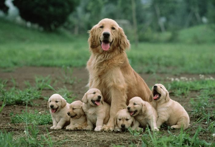 Mother dog sitting with her cute puppies.