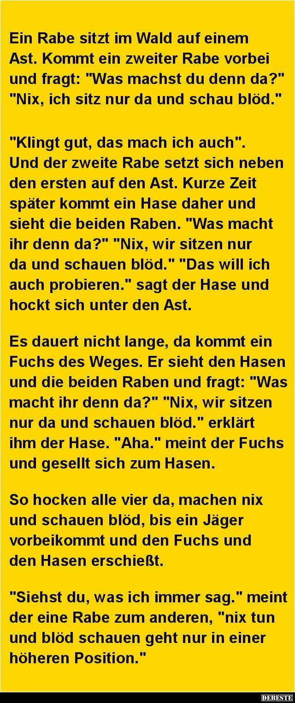 Ein Rabe sitzt im Wald auf einem Ast.. | DEBESTE.de, Lustige Bilder, Sprüche, Witze und Videos
