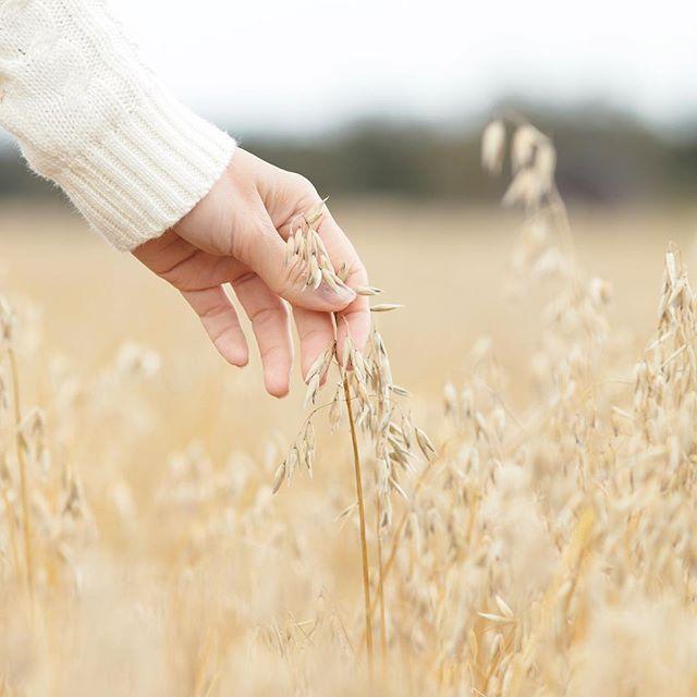 Finnish milled oatmeal - feels like silk on your skin <3