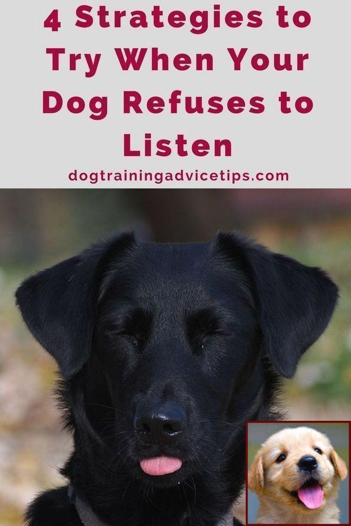 Dog Behavior Problems And Dog Training Courses Montreal Dog