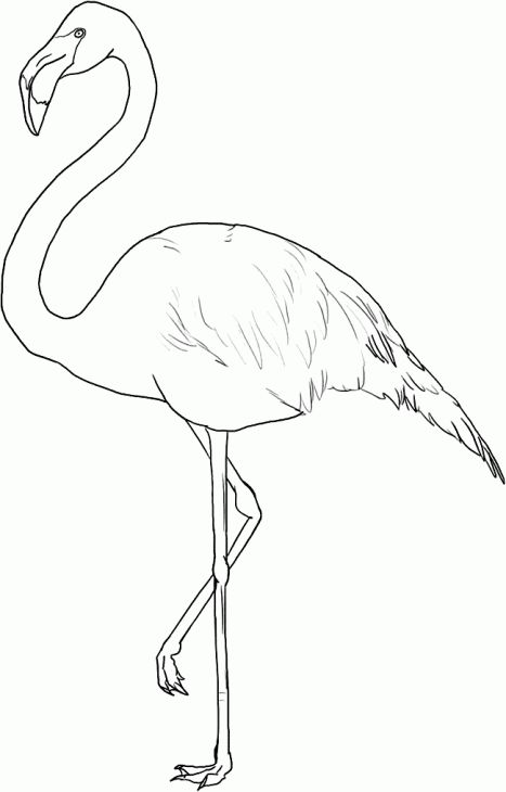 Free Flamingo Coloring Page Art Pinterest Coloring