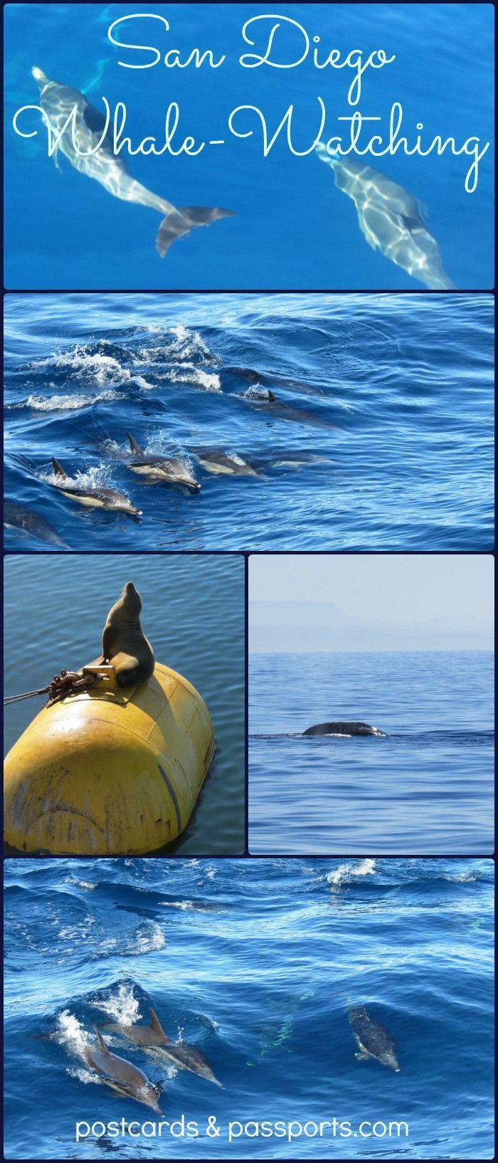 San Diego Whale-Watching - Postcards & Passports: