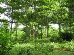 así pues este bosque no llega a presentar el aspecto seco del bosque tropical seco durante la estación desfavorable. Los bosques tropicales estacionales tienen una riqueza de especies que solamente es superada por el bosque lluvioso tropical.