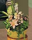 Decorative plants delivered locally overseas!  Visit www.Flowersonlyinternational.com #internationalgifts-flowers