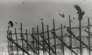 Ravens by Masahisa Fukase review – a must for any serious photobook buff | Books | The Guardian