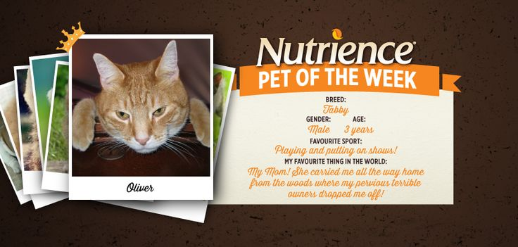 Oliver is one grateful #cat who owes his new #happy life to his #mom! Submit your pet here: http://bit.ly/PetOfWeek