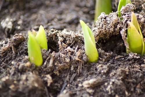 The dawn of life (sprouts, brotes, tierra, dirt)