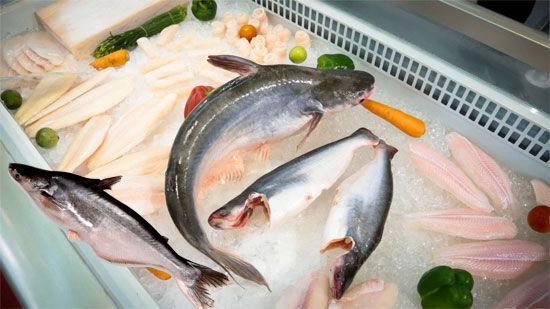 Pangasius fish nutrition facts for What is pangasius fish