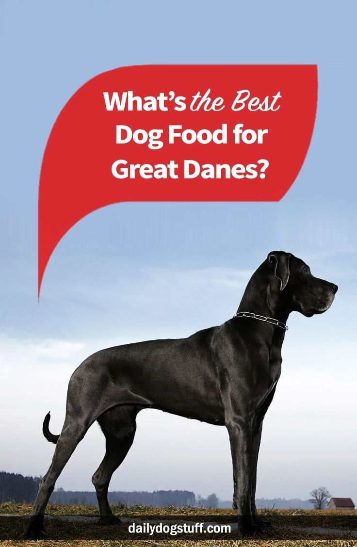 Top 5 Best Dog Foods For Great Danes Dog Food Recipes Best Dog
