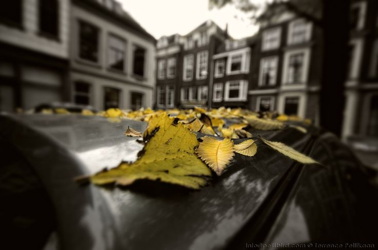 Car roof covered with some leaves