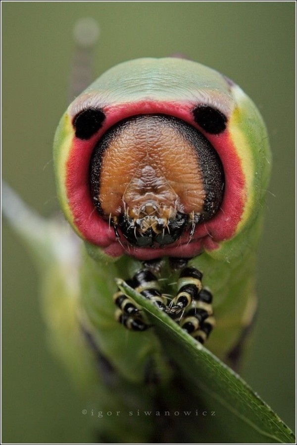 30 Incredible Insect Photographs By Igor Siwanowicz Part-II | The Wondrous Design Magazine