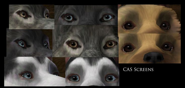 dog eyes (default replacement) - by corapntr on ModTheSims