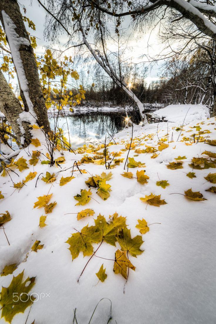 November 2016 ......... leaves snow landscape autumn