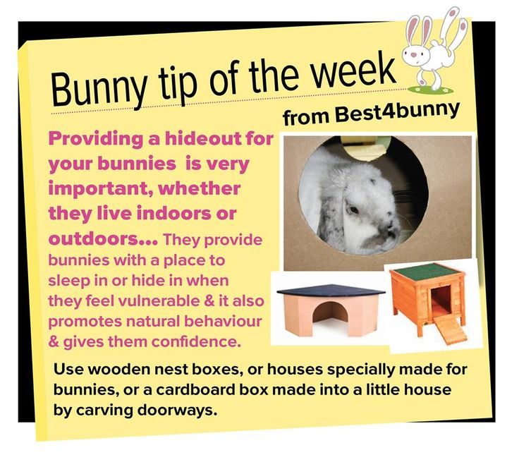 Bunny tip - Always provide bunnies with a hideout. Find some great hideouts here http://best4bunny.com/productcat/housing-accessories/page/2/