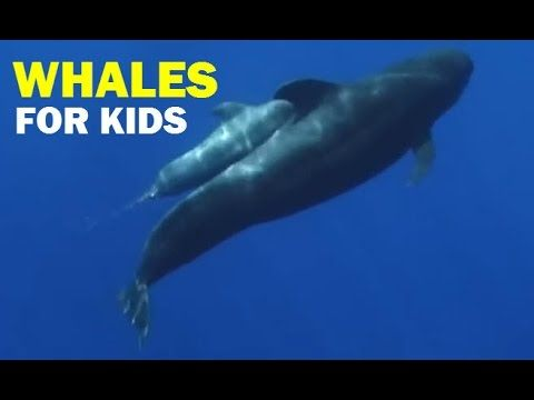 Whales for Kids, Whale Videos for Children, Ocean Whale Video - YouTube