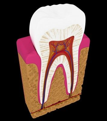 Root Canal Info: Healthy Alternative, Stay Fit, Dead Tooth, Health Danger, My Life, Healthy Body, Mouths, Healthy Wholist, Roots Canal