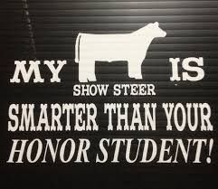 Stock show life . Honor student . Show steer