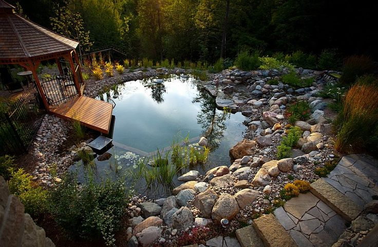 A natural or organic swimming pool sometimes requires less work than a traditional one: no masonry, no chemical equipment for water treatment, etc. However