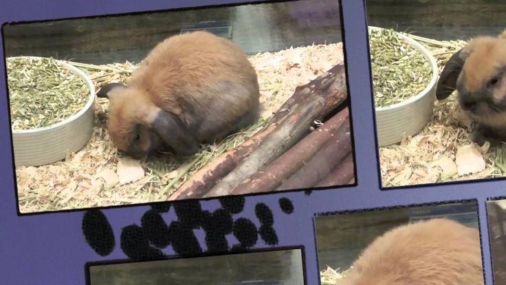 Домашние животные в магазине   щенки, кролики, Pets in the store   puppi...