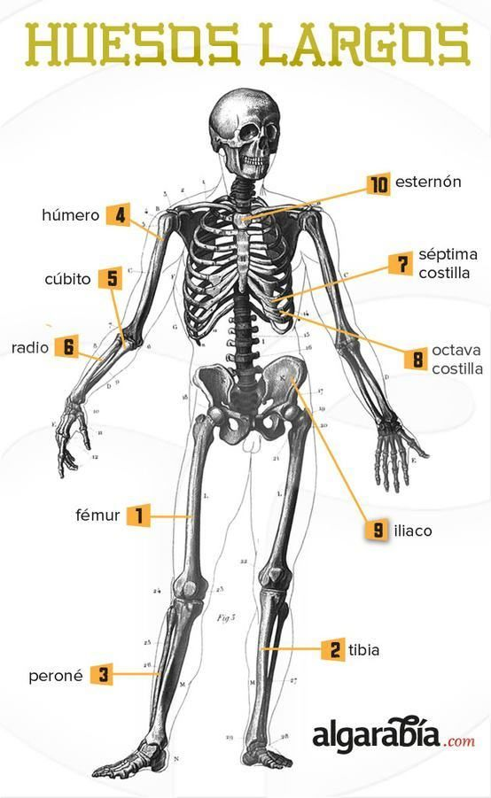 Best 29 Anatomía ideas on Pinterest | Physical therapy, Health and ...