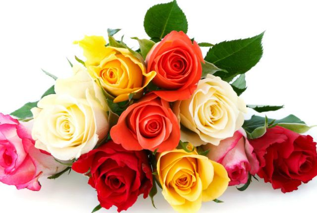 The Meaning of Every Rose Color  - HouseBeautiful.com