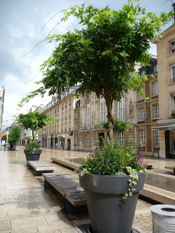 Glycine en arbre cultivée dans un gros pot dans le centre ville d'Amiens (Somme), 15 juillet 2012, photo Alain Delavie