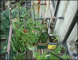 Great Blog about Gardening in Small Places.  Urban Organic Gardener    Basics of Starting an Apartment Vegetable Garden: How to Start Your Apartment GardenAnd Maximize Your Small Space