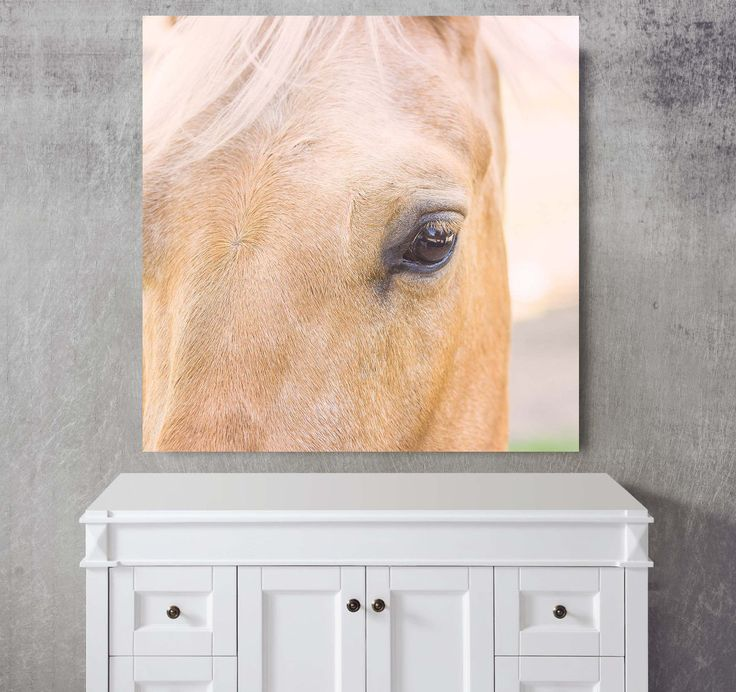 Canvas horse picture Gift for horse lovers Horse Nursery decor Equestrian picture Farm art Photos printed on metal Animal photograph (45.00 USD) by EllowDee