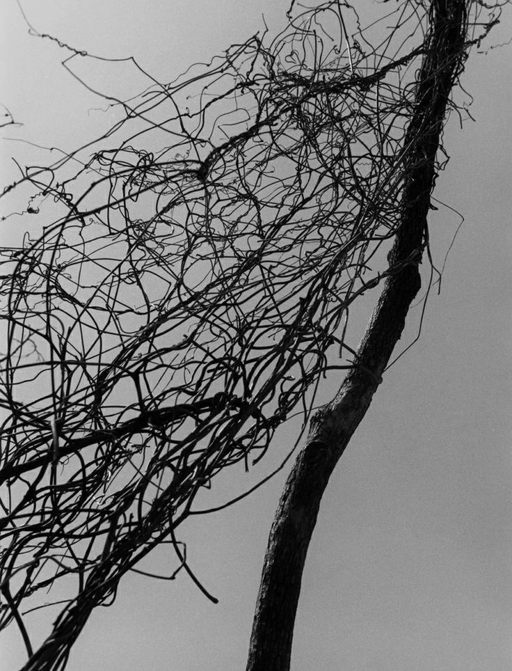 Bohnchang Koo es un comisario y fotógrafo surcoreano (nacido en 1953 en Seúl, donde vive y trabaja) cuyo trabajo se centra a menudo en el paso del tiempo, en la desaparición y en el patrimonio.