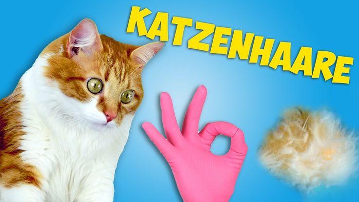 Wie entferne ich Katzenhaare aus Kleidungsstücken? Katzenhaare entfernen, Katzenhaare aus Kleidungsstücken, Katzenhaare aus Kleidungsstücken entfernen, katzenhaare entfernen, katzenhaare entfernen decke