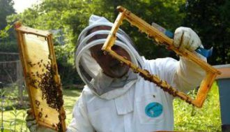 Safe Ways to Get Rid of Bees