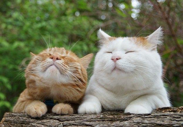 smiley cats 鰻を焼いているところ。