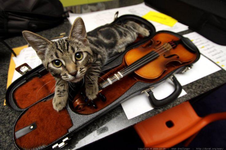Seu gato também gosta de ouvir música para relaxar