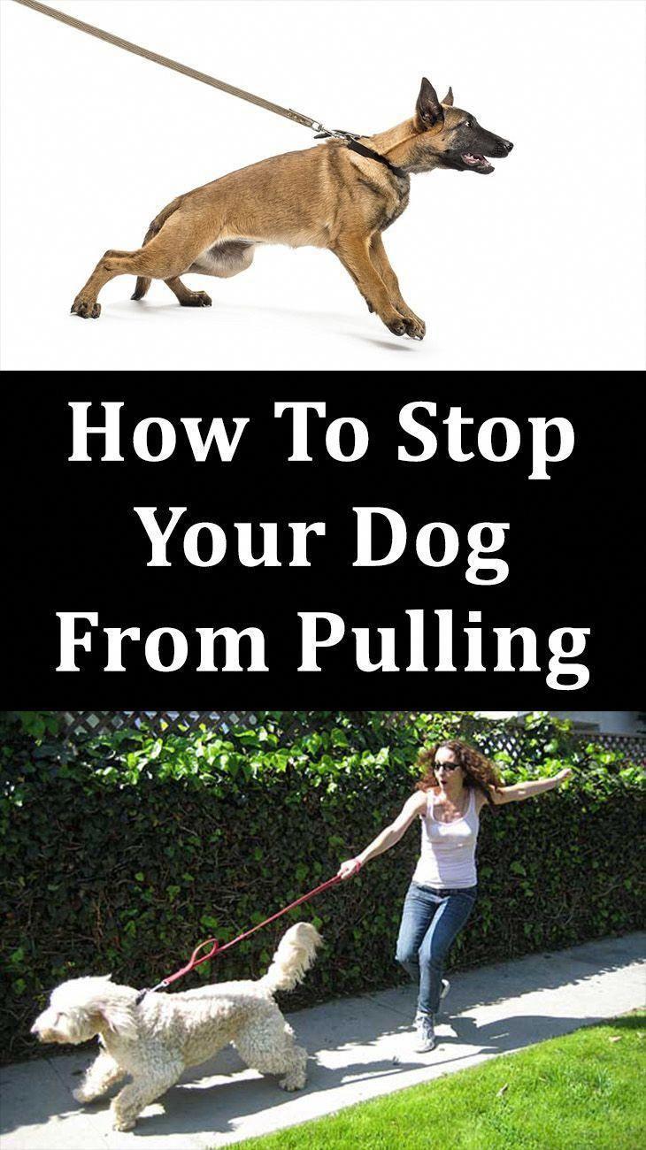 Best Dog Training Methods Dogtrainingtoronto Training Your Dog