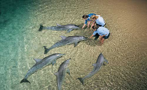Feed the dolphins at Monkey Mia, Western Australia
